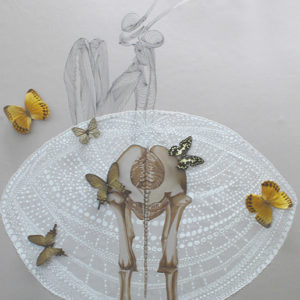 le petit prince open boa painting collage watercolor evolution mantis butterflies